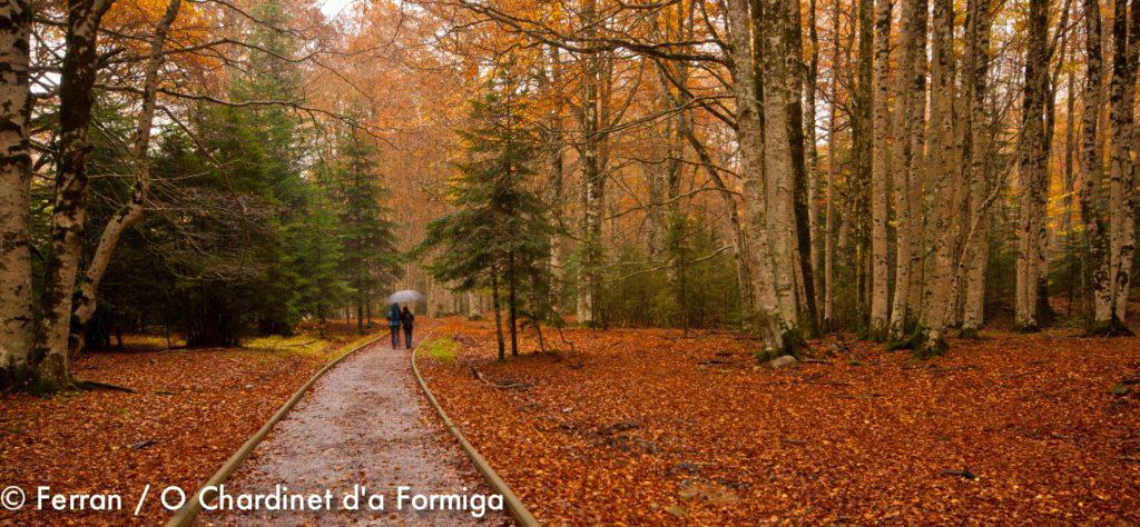 Ordesa para personas con movilidad reducida. Naturaleza. Pirineos. Montaña. Bosques. O Chardinet d'a Formiga casa rural. eco turismo. Huesca.